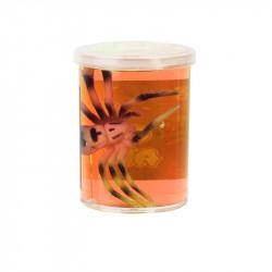 Grossiste pâte gluante orange avec araignée