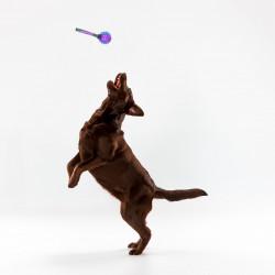 Grossiste Balle sonore bleue pour chien