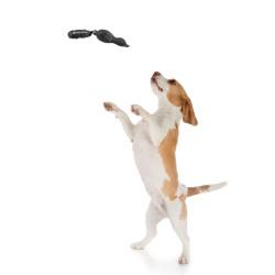 Grossiste Jouet en forme de  canard sonore gris pour chien