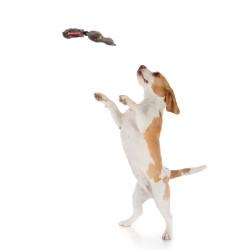 Grossiste Jouet en forme de  canard sonore marron pour chien