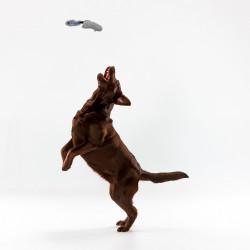 Grossiste Jouet en forme de lapin sonore gris pour chien