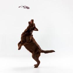Grossiste Jouet en forme de lapin sonore avec pompom violet pour chien
