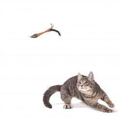 Grossiste jouet stick orange double à plumes pour chat