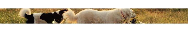Grossiste Animalerie : Fournisseur Accessoires Animaux - Tradaka